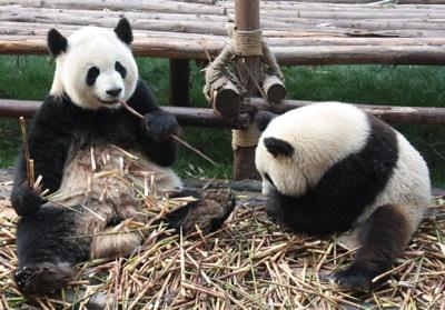 pandacrop