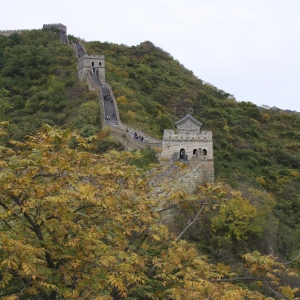 great wall golden